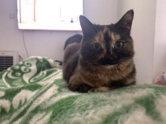 曾经它睡的我一床猫毛让我很嫌弃它,但是它现在不喜欢睡床上了我又总